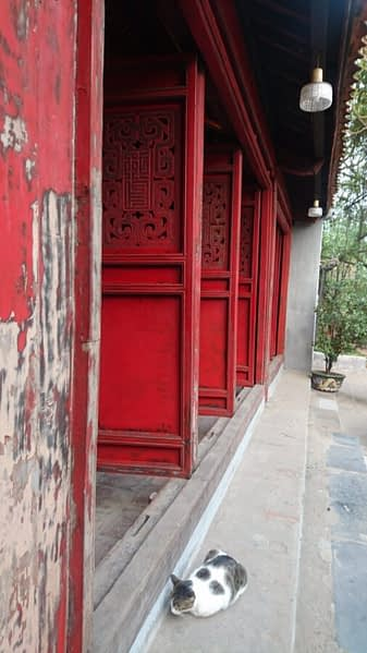 A cat, doing what cats do, in front of the doors of the Ngoc Son temple