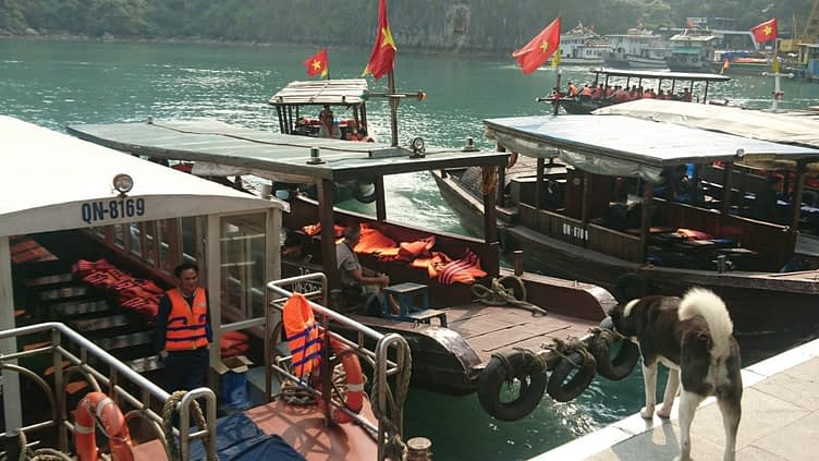 The habourmaster at Bo Hon barks commands at the tender pilots. With so many visitors for the Surprise Cave coming and going, there is a lot of traffic and he has to run a tight ship